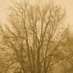 """""""Tree in Winter Fog (0932)"""" by Fotofrieze"""