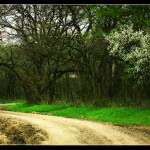 """""""dirt road"""" by tbock"""