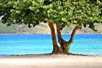 Tropical Beach and Tree in St. Thomas