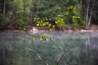 Walden Pond #3