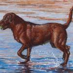 """Chocolate Lab"" by Sue_Deutscher"