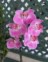 For Orchid Lovers