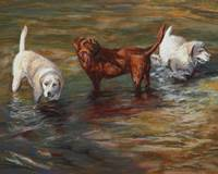 Labrador Retrievers in the Creek
