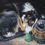 """Sleeping Border Collie"" by Sue_Deutscher"
