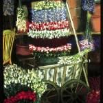 """""""Flower Shop"""" by artbyione"""