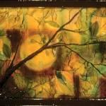 """Autumn"" by artbyione"