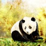 """Panda"" by arroyocreative"