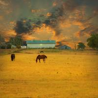 No. 8 - Grazing at Dawn in Peoria, Texas