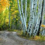 """Aspen Road"" by gmeyerle"