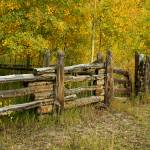 """Split Rail Fence and Aspens"" by gmeyerle"