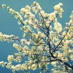 """Winter Blossom"" by OmairHaq"