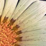 """""""Petals & Pollen"""" by OmairHaq"""