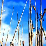 """Reeds that Reach the Sky"" by allanprice"