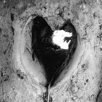 """Forever Love"" by ajphotographysouthend"