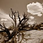 """Sepia Desertscape"" by johncorney"