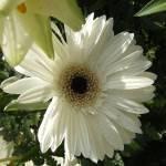 """""""Flower"""" by ajphotographysouthend"""