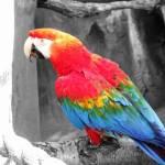 """Rainbow"" by ajphotographysouthend"
