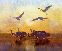sunrise on the marsh - sandhill cranes