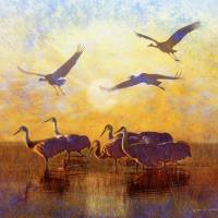 """sunrise on the marsh - sandhill cranes"" by rchristophervest"