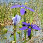 """""""Wild Flowers at Lake Tarpon"""" by spadecaller"""
