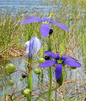 Wild Flowers at Lake Tarpon