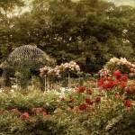 """""""Gazebo Garden"""" by JessicaJenney"""