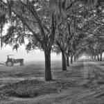 """John Deer Tractor and the Avenue of Oaks"" by Hansen"