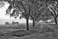 John Deer Tractor and the Avenue of Oaks