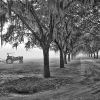 John Deer Tractor and the Avenue of Oaks Art Prints & Posters by Scott Hansen