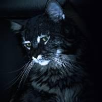 Feline Night Watch by I.M. Spadecaller
