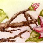 """flowering tree branch"" by dlmtleArt"