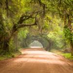 """Charleston SC Edisto Island Dirt Road - The Deep S"" by DAPhoto"