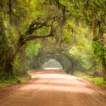 """Charleston SC Edisto Island Dirt Road - The Deep S"" by DAPhoto"