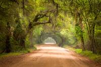 Charleston SC Edisto Island Dirt Road - The Deep S