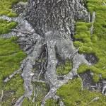 """Moss"" by LeahTrottArt"