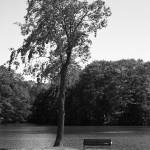 """Serenity"" by kerbear6156"