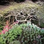 """""""Garden Show"""" by MTeeter"""