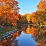 """""""Pinewood Lake"""" by mjculbertson"""