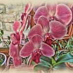 """Pink Orchids"" by jbjoani2"