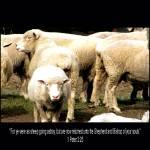 """""""1 Peter 2:25"""" by lwbhoosier"""