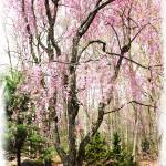 """American Spring"" by Daphsam"