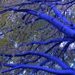 """Blue Trees"" by BallestyJ"
