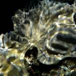 """Finger Coral - that"
