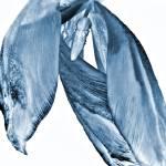 """Blue Wilted Tulip"" by stevekeefer"