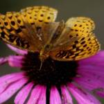 """Butterfly"" by Ryan_Geraghty"