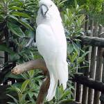 """White Parrot"" by margo"