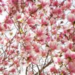"""Glorious Spring"" by Daphsam"