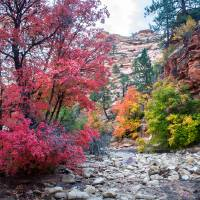 Zion Creek Art Prints & Posters by Peter B. Kunasz