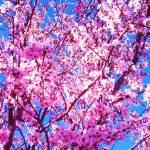"""blossom"" by capturedmoment"
