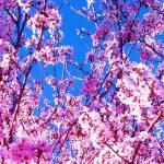 """blossom2"" by capturedmoment"